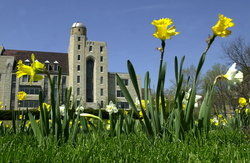 NIU Campus in the Spring